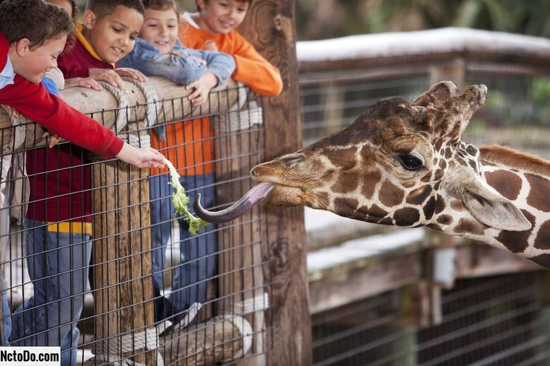 In den Zoo gehen? Plan ahead
