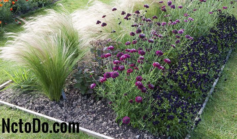 12 2018 for Ornamental grasses for front yard